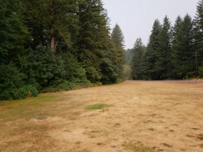 Dog Friendly Grass Area